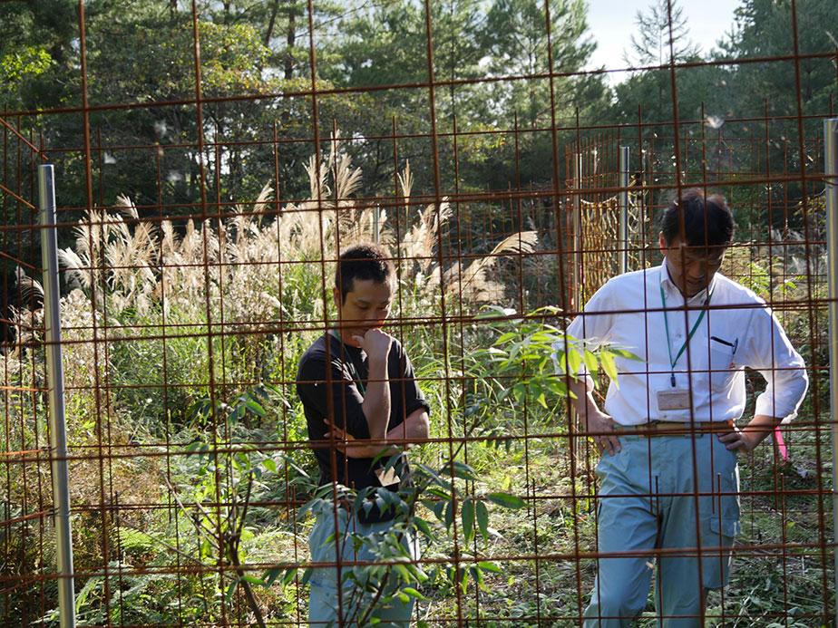 京北地域各所で栽培する櫨を見回る京都市京北農林業振興センターの三嶋さん(右)と井上さん(左)