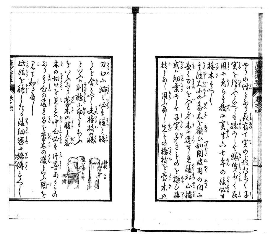 明治3年に刊行された『農家備要』(河野剛 著)。櫨の接ぎ木方法について詳しく解説されている。[国立国会図書館デジタルコレクション]