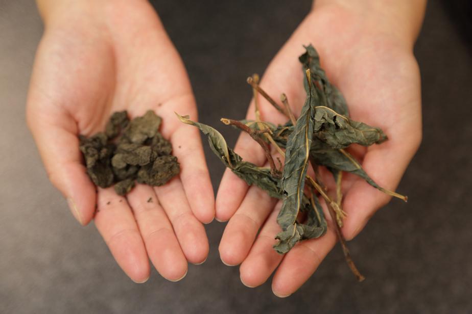 左が藍葉を発酵させつくられる蒅(すくも)、右が藍葉を乾燥させたもの。